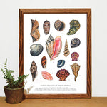 Wild Wander - Mollusks of North America Print