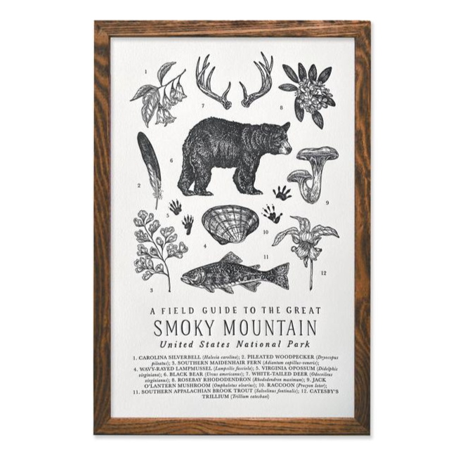 Great Smoky Mountains Park Field Guide Print