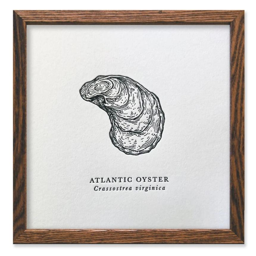 Atlantic Oyster Letterpress Print