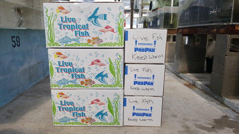 Tropical Fish Shipping Box