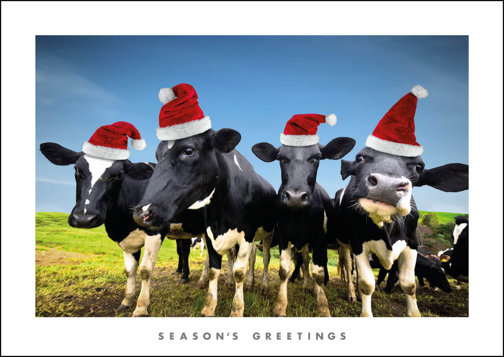 NZ809 Moo-ry Christmas