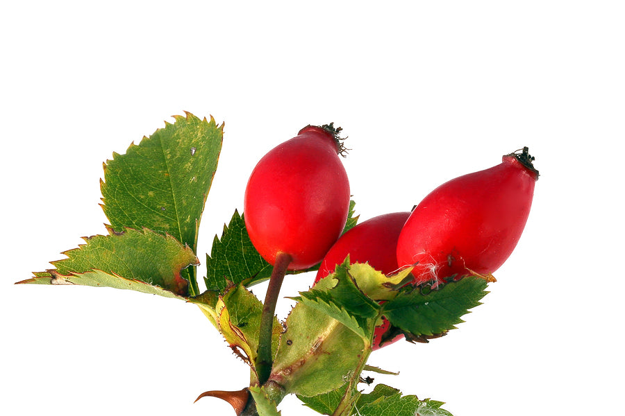 Benefits of Rosehip Seed Oil for Skin and Hair
