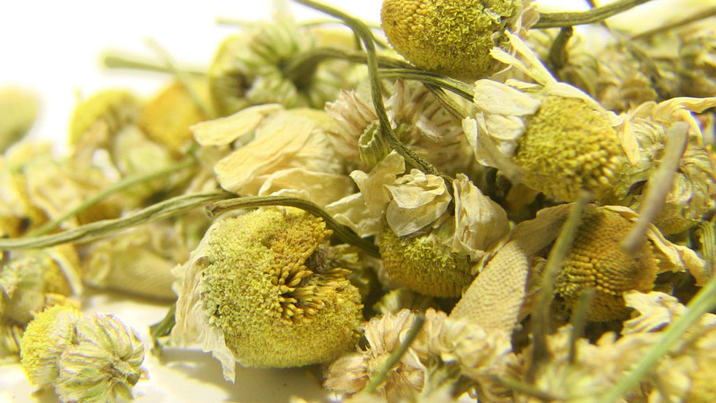 Herbal Tea - Egyptian Camomile - Black Iron Tea Traders