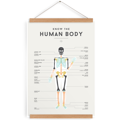 'HUMAN BODY' by Squared Charts