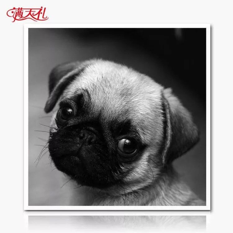 CD1121 Crystal 5D Dog Pug Cm.40*40full