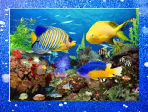 CD1167 Crystal 5D Ocean Fish Cm.40*60