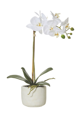 Orchid - butterfly smooth pot