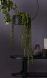 Greenery - String of Pearls - 71cm