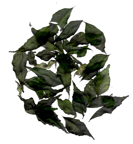 CURRY LEAVES - CURRY PATTA - Leena Spices