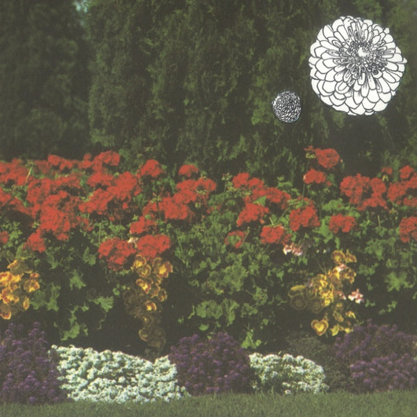 Imaginary Softwoods - Annual Flowers In Color LP