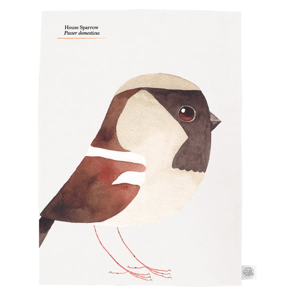 Matt Sewell's Birds – Sparrow Tea Towel