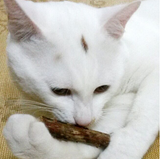 5Pcs Pet Kitten Cat Molar Cleaning Teeth Pure Natural Catnip Chew Matatabi Polygama Sticks Offer - Bullseye Discounts
