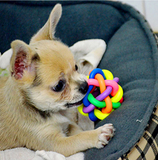 Colorful Rubber Round Chewing Ball with Small Bell Pet Dog Cat - Bullseye Discounts