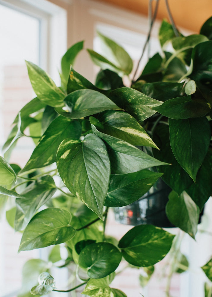 7 Low Maintenance House Plants