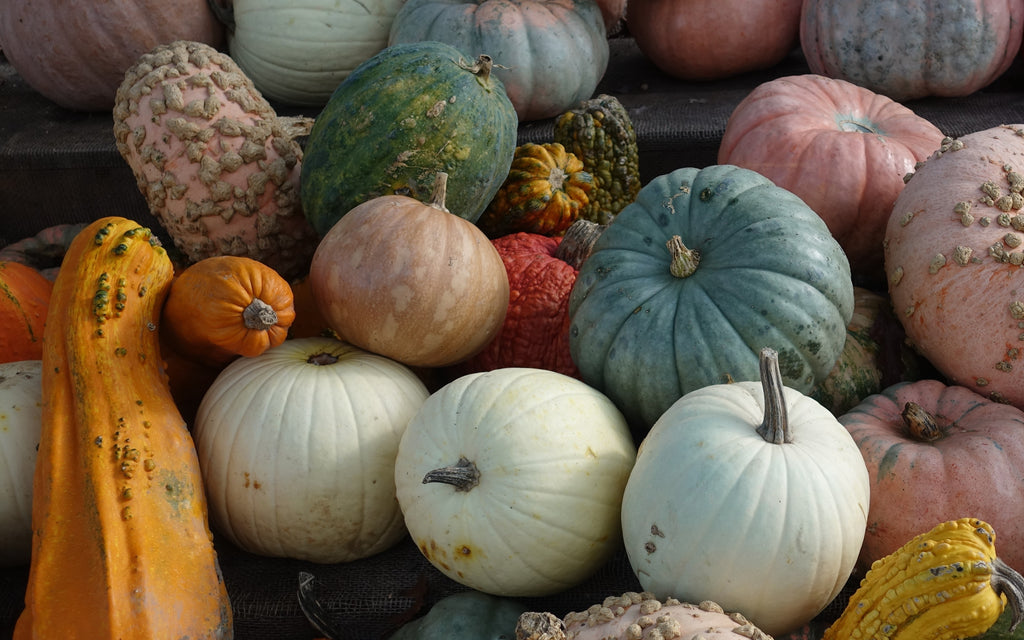 squash and pumpkin top 10 autumn fall superfoods fruits and vegetables