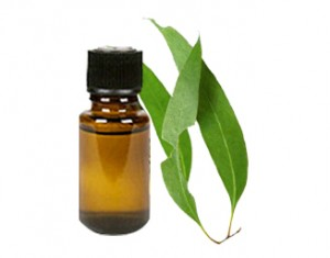 eucalyptus oil for nail fungus