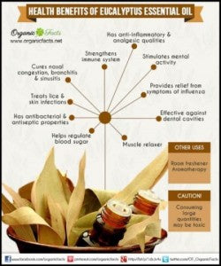 health benefits of eucalyptus oil