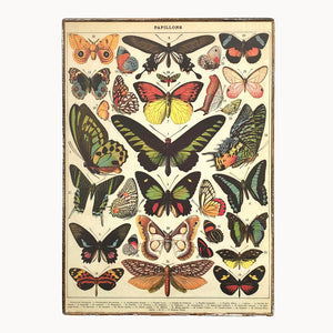 framed cavallini butterfly paper poster