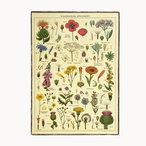framed cavallini wildflowers paper poster
