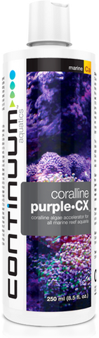 Continuum Purple - CX