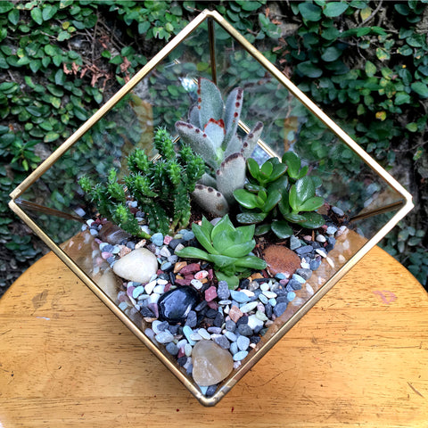 Cube Design Large Copper Frame Terrarium - Gold