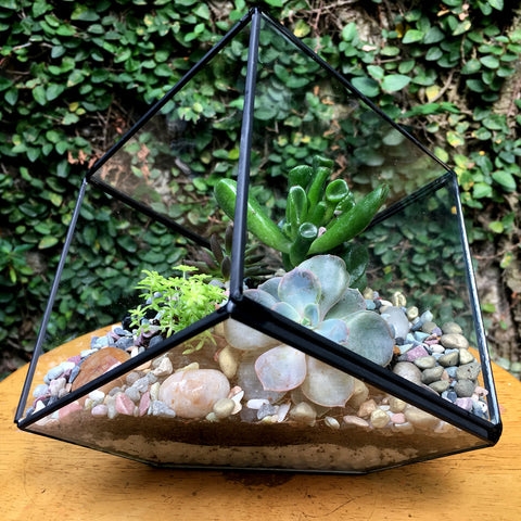 Cube Design Large Copper Frame Terrarium - Black