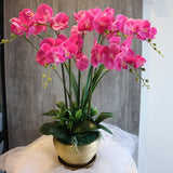 Premium Quality Artificial Orchid in Gold Pot (5 stalks)