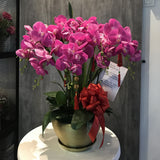 Artificial Orchid Flowers (6 Stalks)