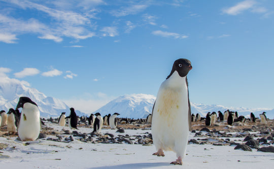 The Antarctic Peninsula