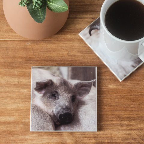 Pig Coaster Set of 4