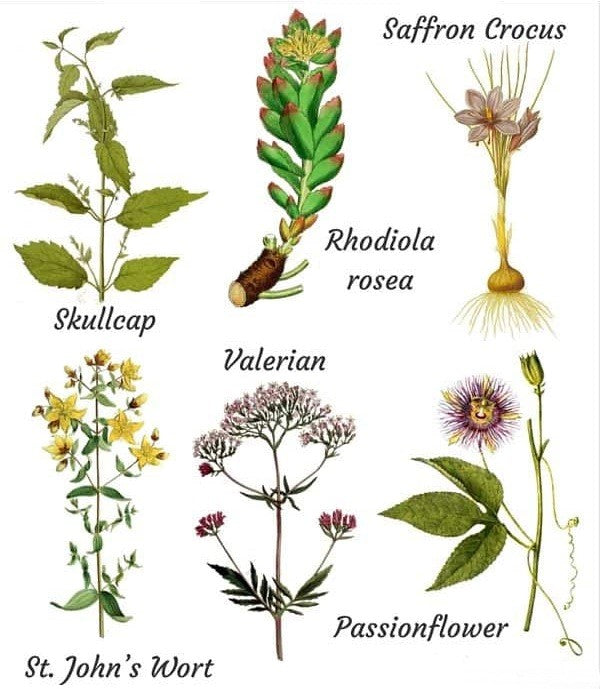 Herbal supplements for outburst