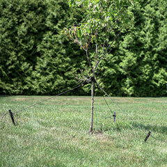 Heavy Duty Tree Stakes