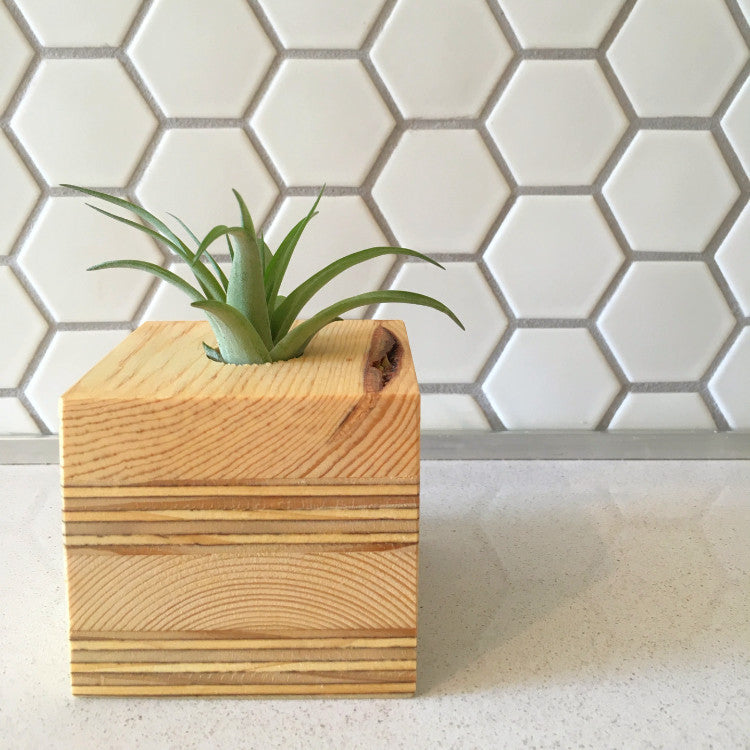 Air Plant Planter - Square