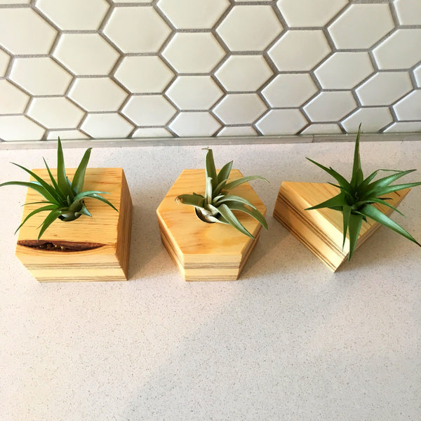Air Plant Planter - Set of 3