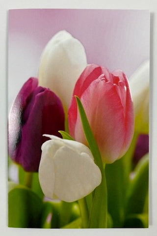 Modern Living Card - Tulips