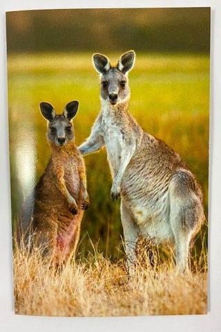 Still Life Card - Kangaroo Pair