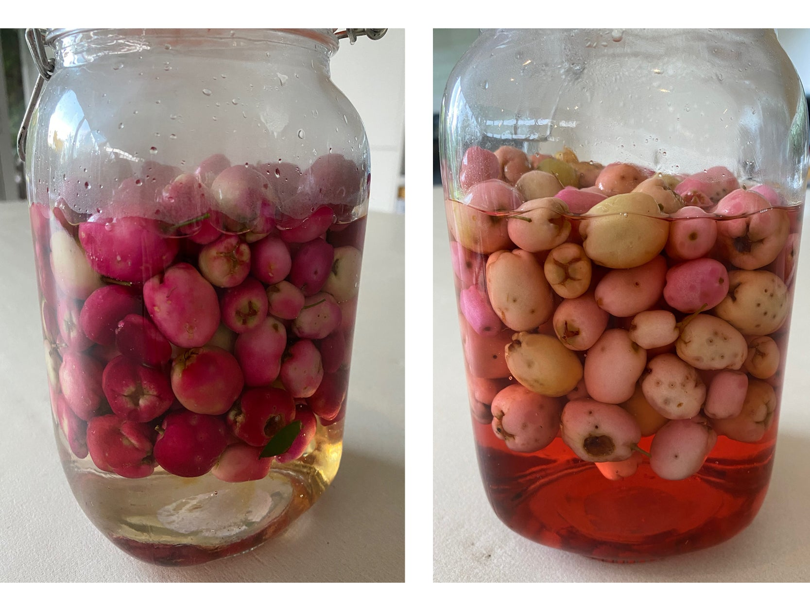 Lilly Pilly infused gin