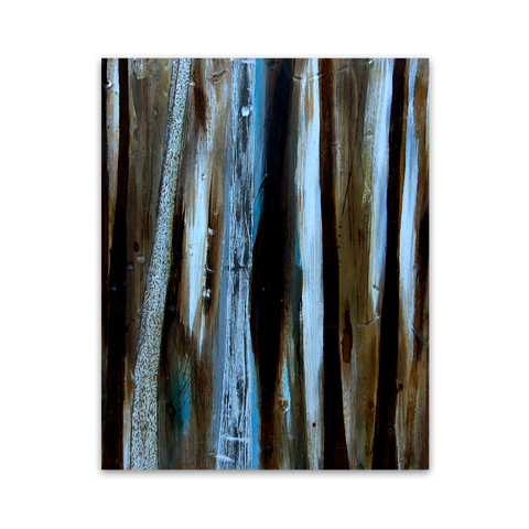 Can't See the Forest Triptych No.2-b