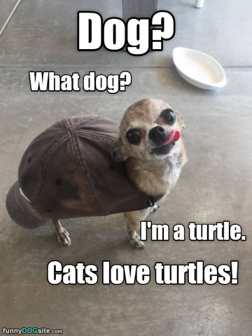 dog dressed as a turtle funny