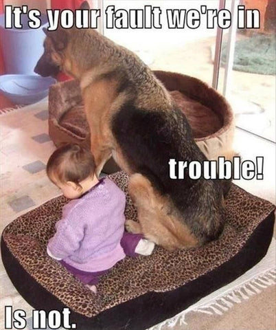 dog and baby toddler in trouble