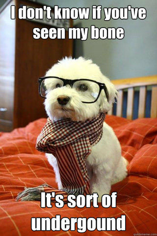 dog with glasses and scarf