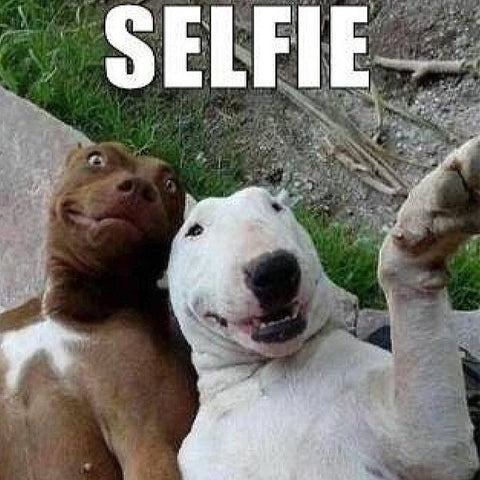 two dogs taking a selfie funny