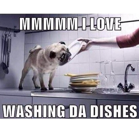 dog licking dishes plates