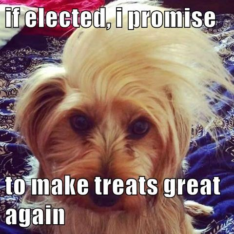 dog who looks like donald trump with quiff