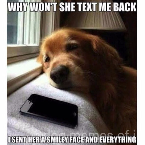 sad dog waiting for a call text mobile