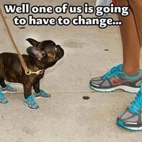 dog wearing blue trainers