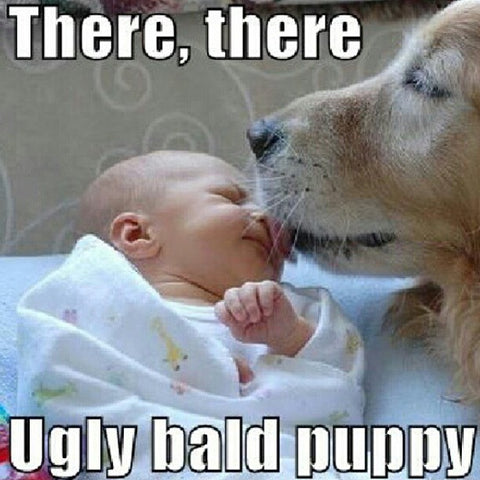 dog licking baby funny