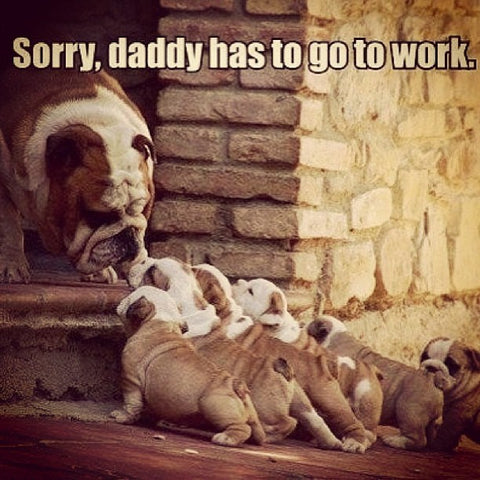 daddy dog goes to work cute puppies
