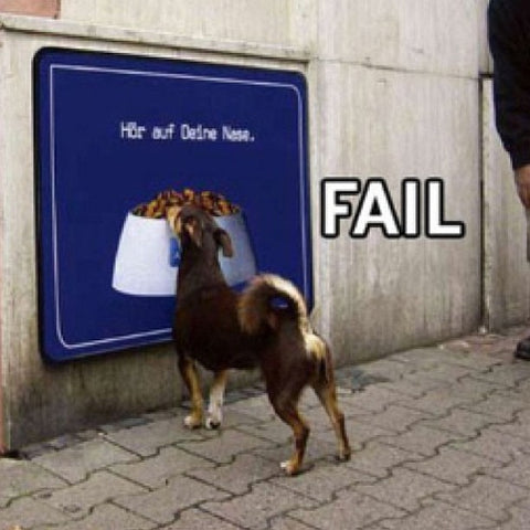 dog with street sign fail funny