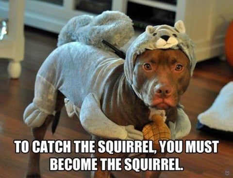 dog dressed as squirrel funny